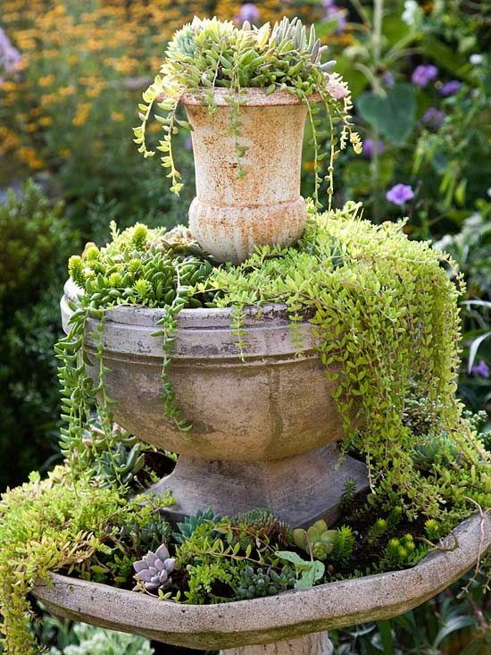 Bird Bath Planters New Focus Daily
